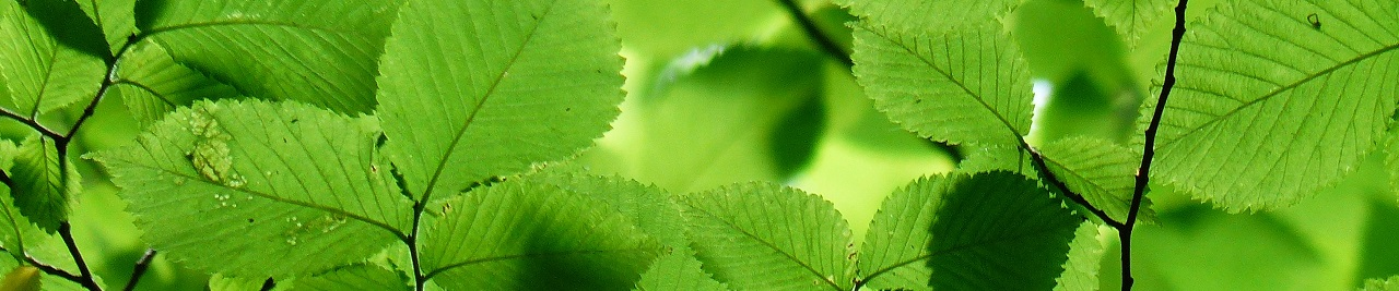 drzewa i krzewy liściaste